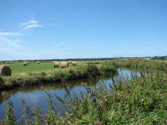 Marais du Bessin ©CF OTI IGI