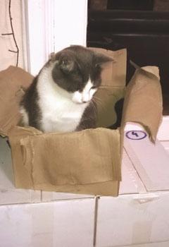 "A ""catboard"" box?"