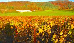La Montagne de Reims et ses poches de craie