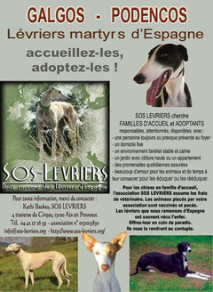 affiche adoptions accueil