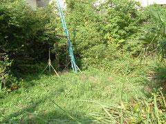 剪定 除草 伐採 庭掃除 植木屋 施工事例