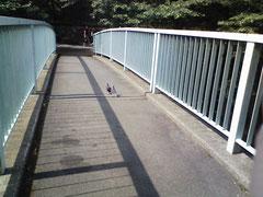 小さいけれど、橋の真ん中に鳩が二羽います