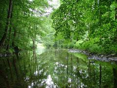 Het riviertje dat door de Camping loopt