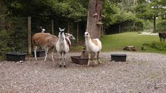 Ein Tag im Tierpark Röhrensee