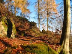 Schöner Wander-Herbst in Zorge (Foto: Daniel Schwarz, Barbis)