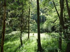 Vielfältige Waldtypen um Zorge