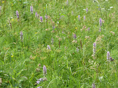 Viele Blütenpflanzen im Harz