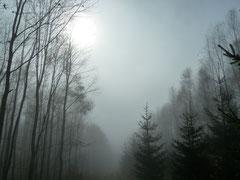 Erholsames Wandern im Nebel