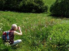 Blumenwiesen um Beneckenstein