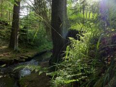 Im wildromantischen Wolfbachstal