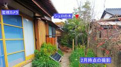 2月に撮影したもので、菜の花もまだ少ない