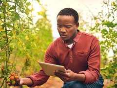 Afrika, Israel, Agrar, Landwirtschaft, Leap-frogging