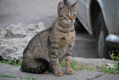 Trächtige Katze in Bulgarien