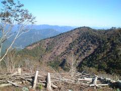 山を伐り開き進めた拡大造林