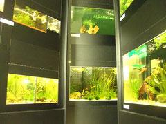 Unsere Aquarienanlage kurz nach der Fertigstellung