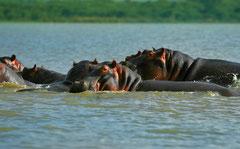 Le Lac Naivasha