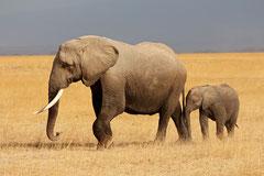 La Réserve d'Amboseli