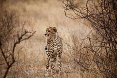 Réserve Maasai Mara, Kenya