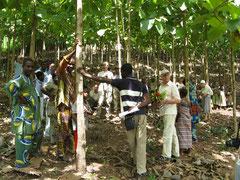 Bäume pflanzen hilft dem Klima