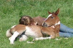 Curly foal and Isabeau
