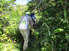 登山道に覆いかぶさる草を刈る。