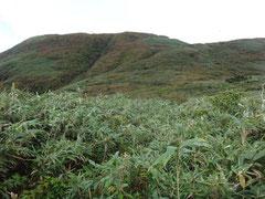 笹原を抜けるとやっと山頂が現れた。