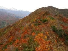 紅葉稜線と焼山。