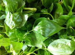 酵素ジュースの材料として山菜、こんてつ、こしあぶら