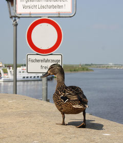 10 Ente+Schild/Duck+Sign