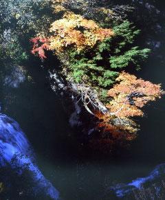 渓谷の彩り  小林 健一郎