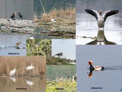 Auszug der gesehenen Vögel Foto K-H Kuhn