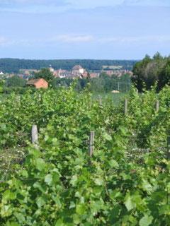 Vignobles de Chateaumeillant
