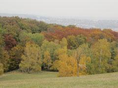 Lainzer Tiergarten, Wienerblick