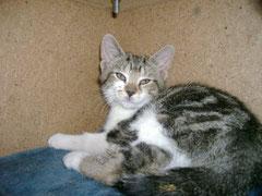 Lilie, 2 mois
