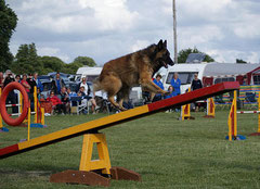 Agility, balançoire, photo Mister b 1138