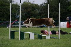 Agility, saut en longueur, photo Mister b 1138
