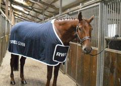 unser neues Super-Pferdchen :)