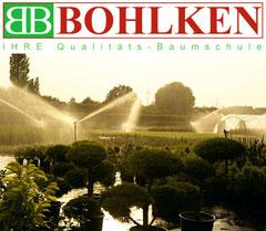 Baumschlue Bohlken - Online-Shop