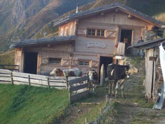 Oberhütte - 2.150 m
