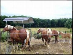 Les chevaux de trait d'Hagenbach