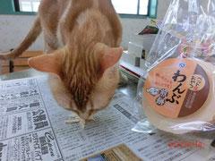 *「わんぶ煎餅」に食らいつく猫(笑)