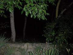 The fireflies WERE there amongst the trees......  Pity about the flash!