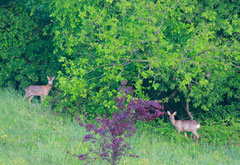 Two lovely deer               Photo by N. Joseph