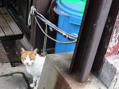 野良猫は相当ワルい表情