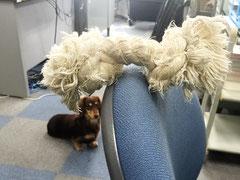 ロープとハナコ