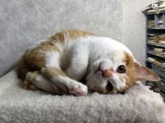 青木防災に住むネコのタマスケ