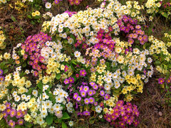 Frühling in Luzern