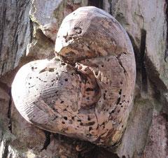 Finden Sie das Herz auf dem Waldmenschenpfad?