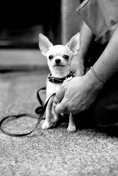 小型犬も運動が大好きです。