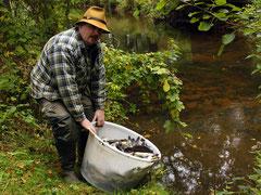 ASV-Gewässerwart Thorsten Wieck beim Einsetzen junger Fische